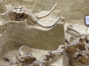 MammothSkullTusks