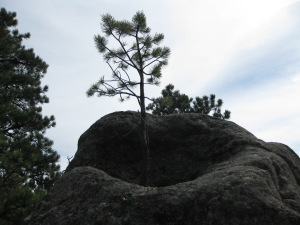 TreeGrowinInRock