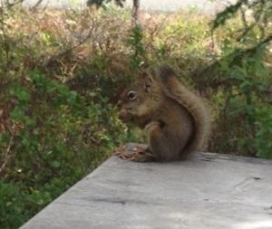 Greeter At Denali Visitor Center